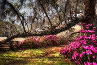 Spring In Lowcountry
